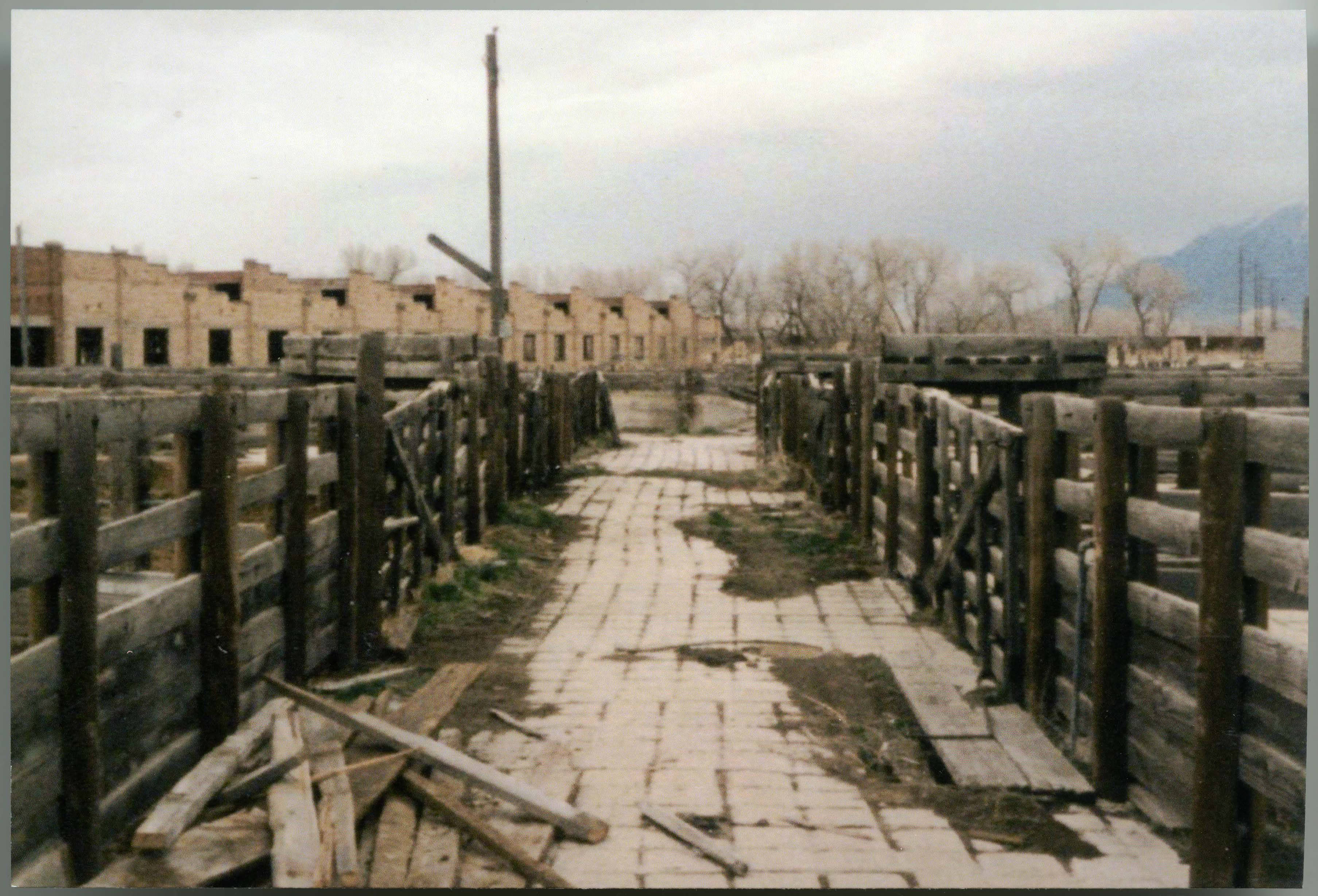 A 1987 photo of the Ogden Union Stockyards abandoned pens and cracking concrete. Photo from Weber State University Stewart Library Special Collections.