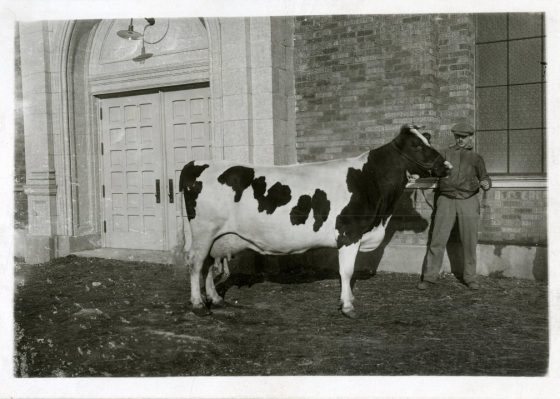 Man with a cow in front of a building at the Ogden Union Stockyards. He is wearing a jacket and cap. Image probably about 1930. Special Collections Department, Stewart Library, Weber State University