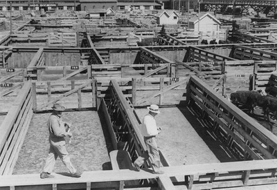 Men on catwalk above the pens in the Ogden Union Stockyards. one wearing a cowboy hat and overalls and the other in a white fedora, slacks and white shirt. Thank you to Don Strack for generously sharing this photo, part of his extensive gallery.